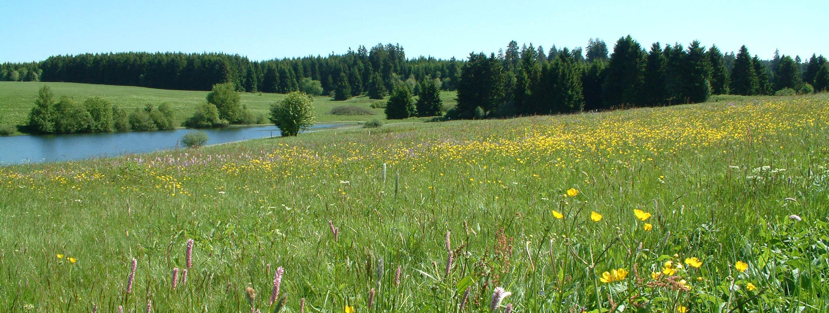Foto Wiesen am Sumpfteich Buntenbock Harz