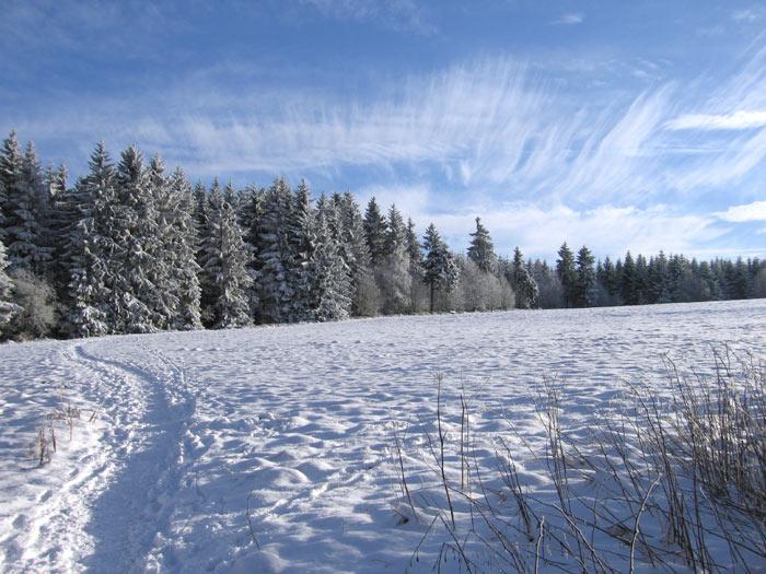 Foto Verschneite Bergwiesen um Buntenbock Harz