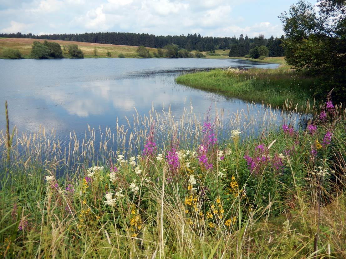 Foto Blick über den Sumpfteich