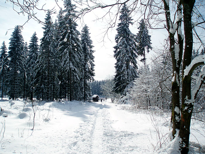 Foto Winterwanderweg um Buntenbock Harz